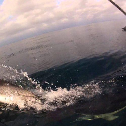 J/125 vs Dolphins